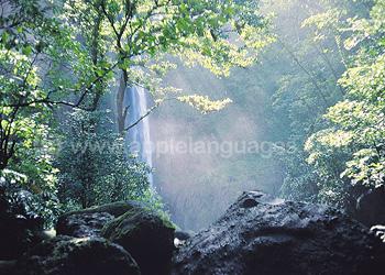 Costa Ricaans regenwoud