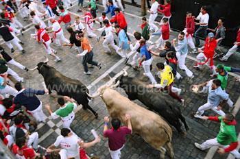 De beroemde stierenrennen