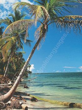 Van het tropische klimaat genieten