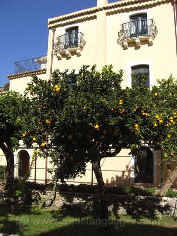 Fruitbomen in de tuin van de school