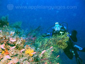 Studenten aan het duiken
